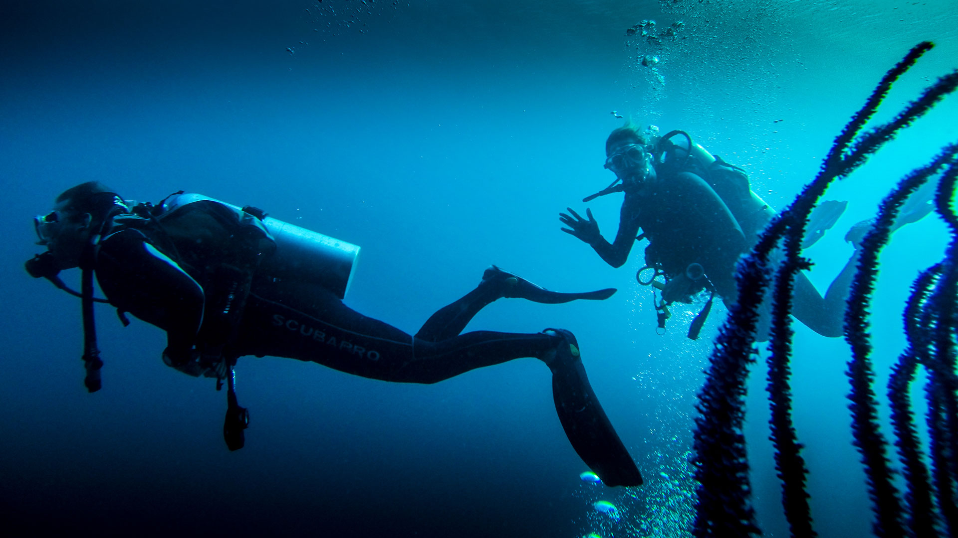Deep, channel, wall and night dives