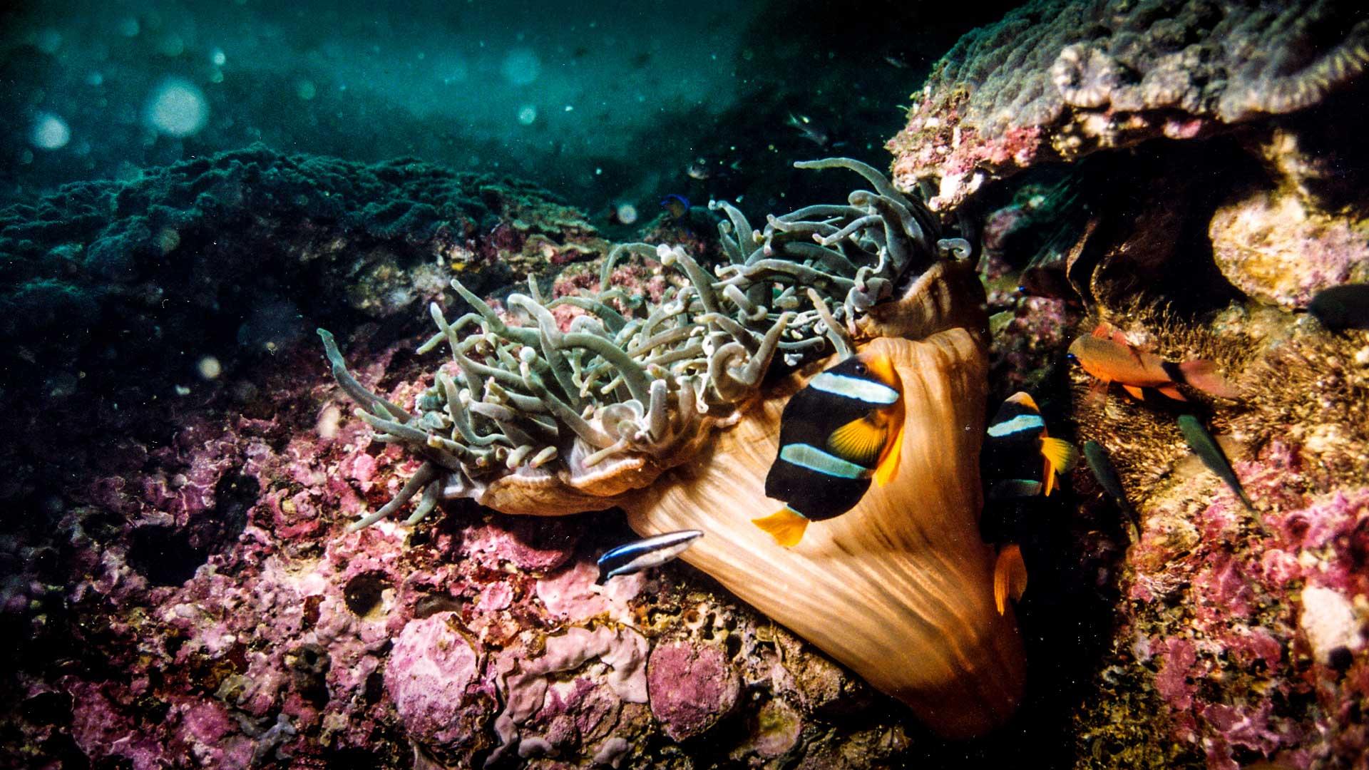Brilliant and abundantly coloured coral garden